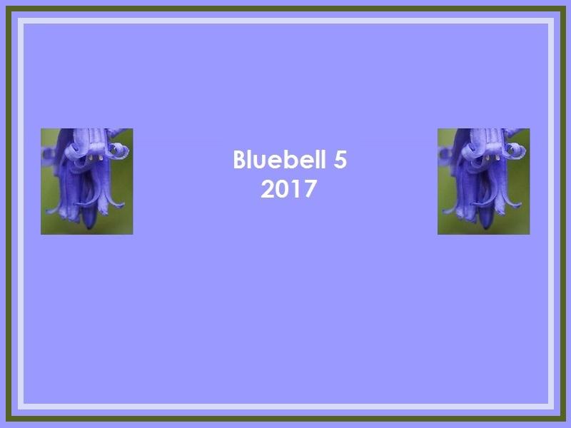 BLUEBELL 2017